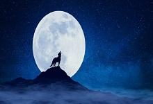 一狼假寐出自哪篇古文 一狼假寐出自哪篇
